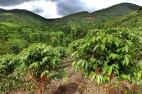 Coffee Farmer and Extension Manager Promotes Improved Health and Livelihoods in Rwandan Coffee Commu...