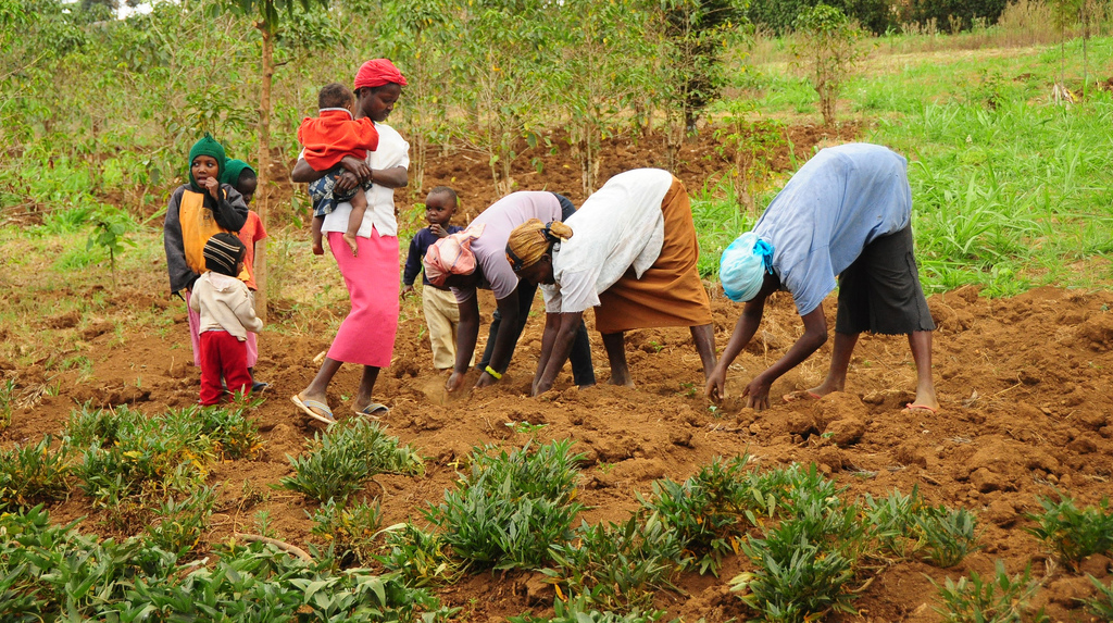 the role of women in agriculture Women play important roles in agriculture, undertaking a wide range of activities   perform its role in mainstreaming women participation in agriculture in kogi.