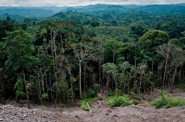 the characteristics of the tropical rain forests in the congo basin Deforestation rate falls in congo basin countries  the royal society b as part of a set of 18 papers on the region's tropical forests  and key characteristics of the region's forests .