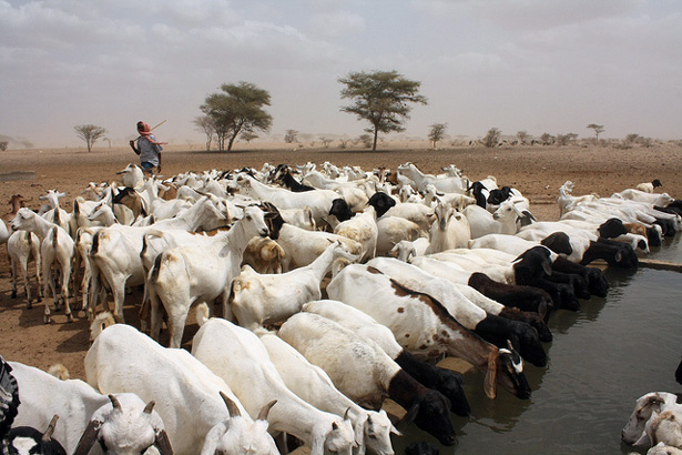 In Kenya, Water Stress Also Breeds Cooperation Between ...