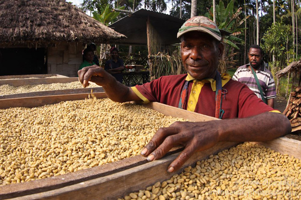 Coffee farmer in Papua New Guinea participating in the Tree Kangaroo Conservation Project