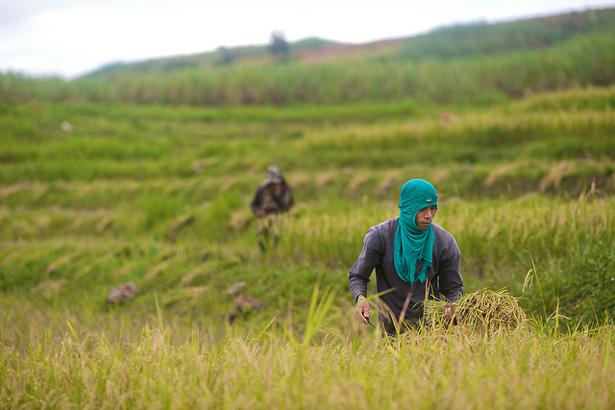 Philippines Farming