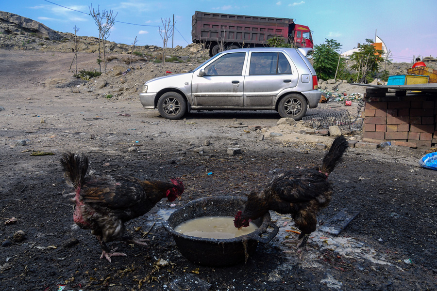 Wuhai City Blackened Chicken