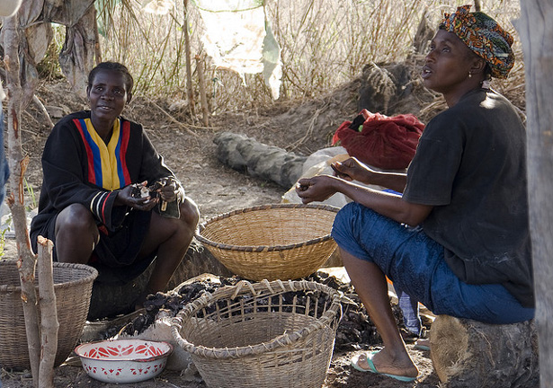 Oyster Harvesters in The Gambia