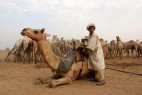 New Sudan Study Has Researchers Re-Thinking Risks and Resilience of Pastoralism