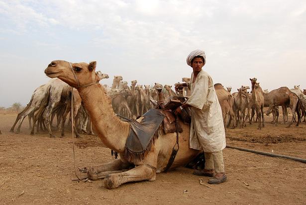 Pastoralism in Sudan