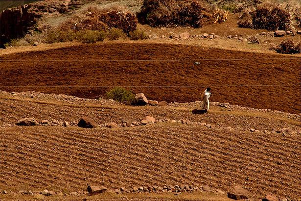 yemen-farm