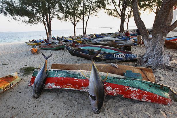 mozambique_tuna