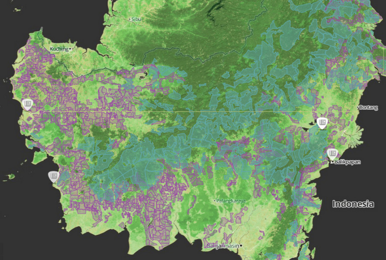 Indonesia's Borneo palm oil plantations and logging concessions