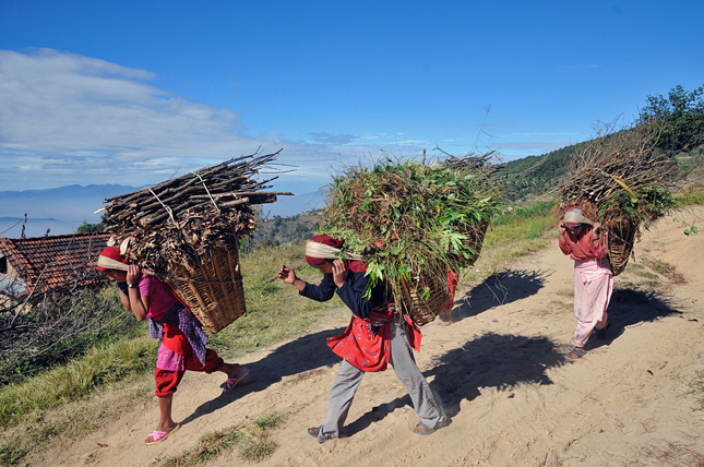 Nepalese women carry wood harvested sustainably from a forest.