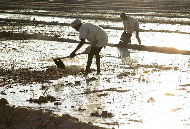 India-water-farming