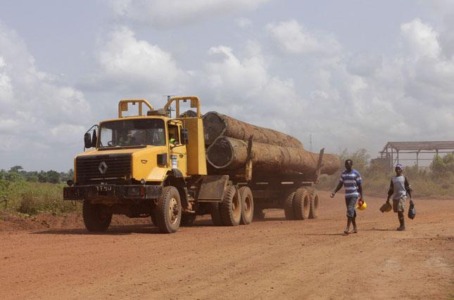 liberia timber1