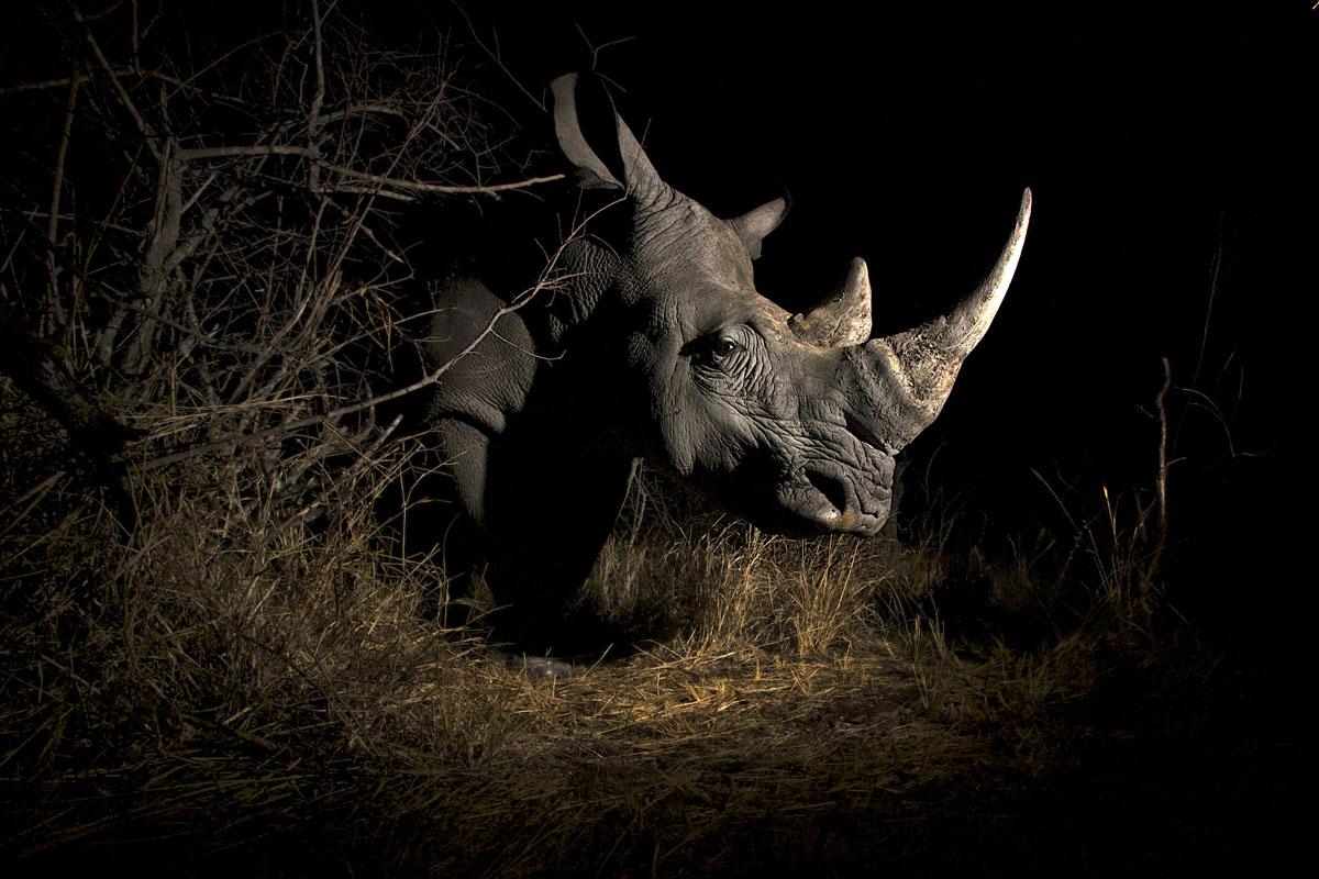 rhino-remote