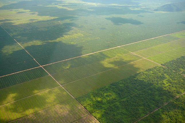 palm-plantation
