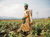DRC-farm