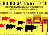 Rhino horn March 2017 (5)