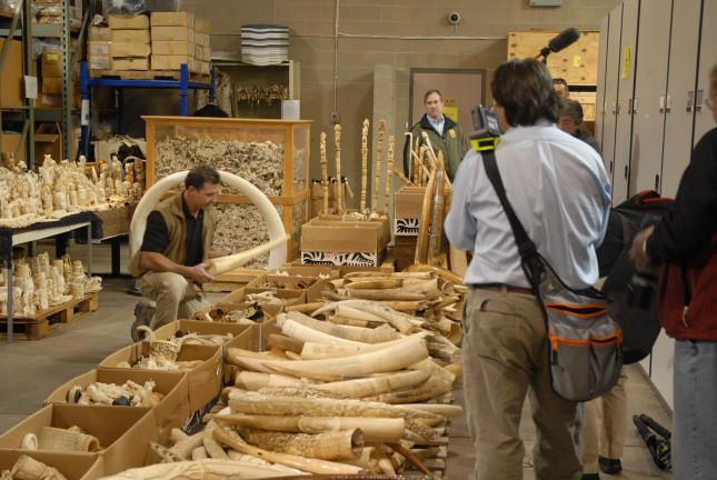 US Seized Ivory