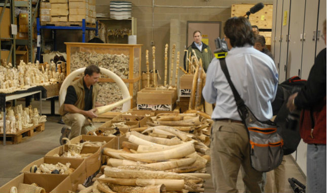 Trump Builds Upon Obama's Fight Against Illegal Wildlife Trafficking