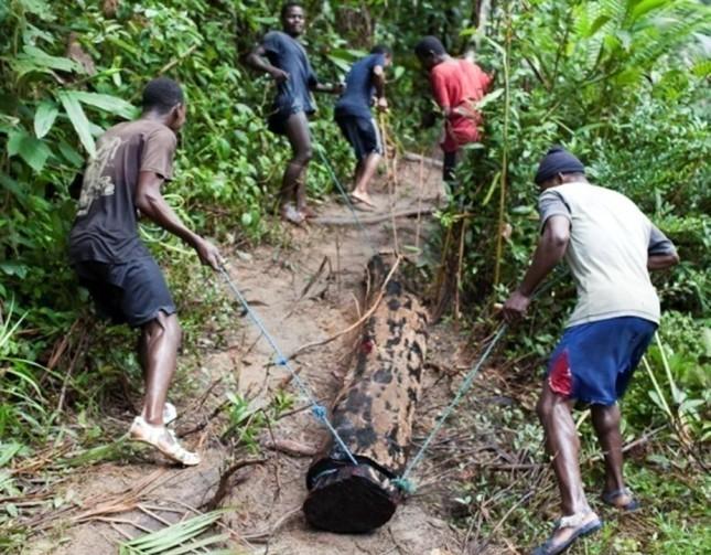 Hauling Rosewood Logging