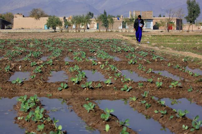 AfghanAgriculture