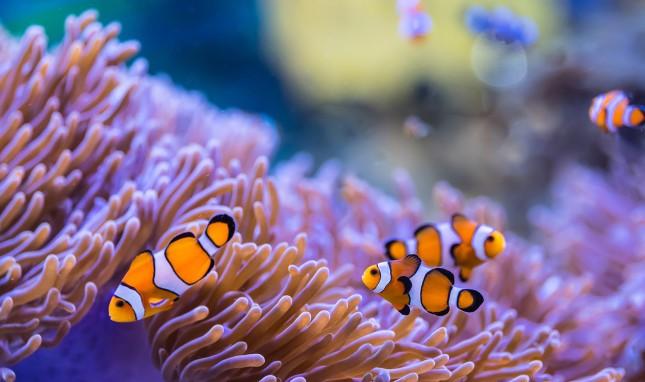 A Dangerous Taste for Plastic in the Ocean Depths