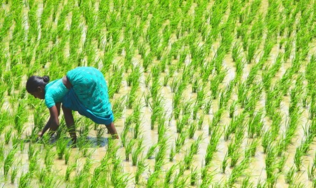 Gender Equality and Food Security in Rural South Asia: A Holistic Approach to the SDGs