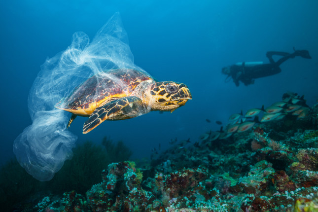 turtle with plastic bag