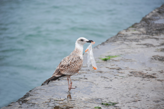 bird with plastic bag in mouth