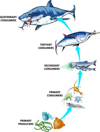Algae to Big Fish Graphic