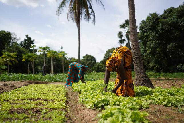 Two,Women,Farmers,Weeding,A,Salad,Garden,In,A,West